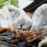 बर्डफ्लुको मारमा परेका किसानलाई क्षतिपूर्ति